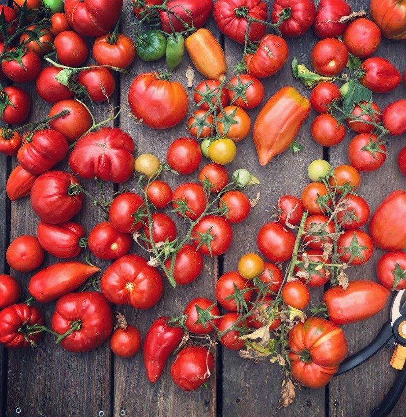 chateau cramirat tomato